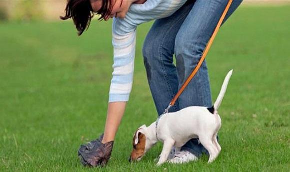 Madrid: Amenzi pentru stăpânii de câini care nu curăță mizeria lăsată de patrupede