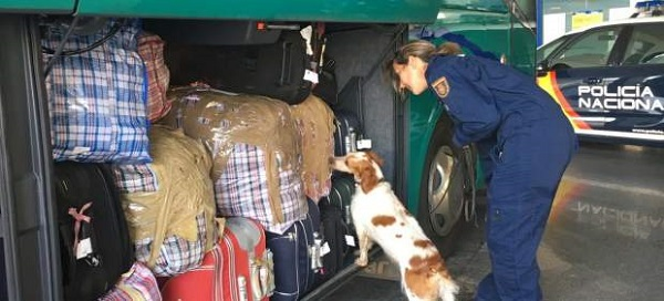 Transportau droguri cu autobuzul. Două românce prinse cu 20 de kilograme de hașiș