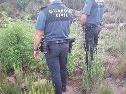 cultura de marijuana in Spania